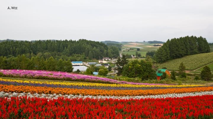 What's Hot in Japan: Furano andAsahikawa